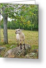 Happy Sheep Posing For Her Photo Greeting Card