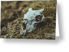 Sheep Skull Greeting Card