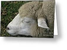 Sheep Sleep Greeting Card