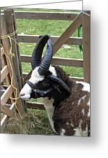 Sheep Three Greeting Card