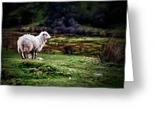 Sheep View Greeting Card