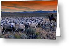 Sheepherder Life Greeting Card
