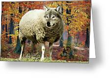 Sheep's Clothing Greeting Card