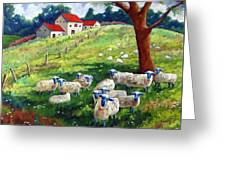 Sheeps In A Field Greeting Card