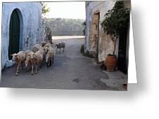 Sheeps Of Crete Greeting Card