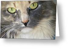Shelby's Eyes 4 Greeting Card