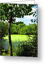Sheldon Marsh Algae Pond Greeting Card
