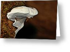 Shelf Fungus On Bark - Quinault Temperate Rain Forest - Olympic Peninsula Wa Greeting Card