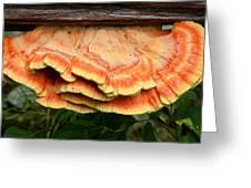 Shelf Mushroom Greeting Card