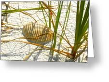 Shell And Beach Greeting Card