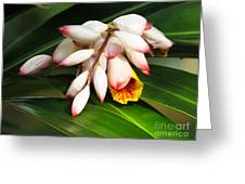 Shell Ginger Flowers Greeting Card