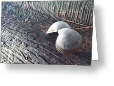 Shell Greeting Card