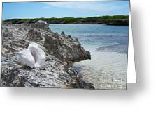Shell On Dominican Shore Greeting Card