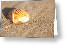 Shell On The Beach 2 Greeting Card