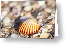 Shell On The Beach 3 Greeting Card
