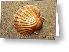 Shell On The Sand Greeting Card