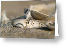Shell Pile Greeting Card