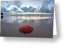 Shell Rise Greeting Card