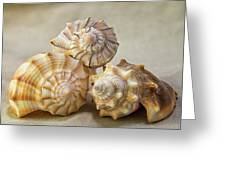 Shell Still Life Greeting Card
