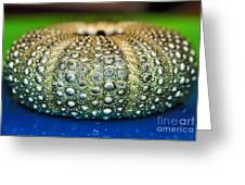 Shell With Pimples Greeting Card