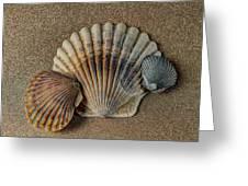 Shells 1 Greeting Card