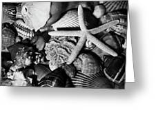 Shells And Starfish In Black And White Greeting Card