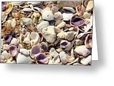 Shells Aplenty Greeting Card