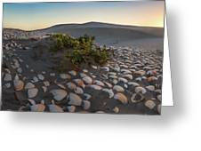 Shells At Desert Greeting Card