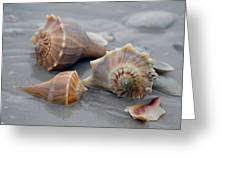 Shells For Barb Greeting Card