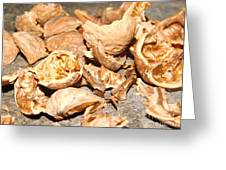 Shells Of Nut Greeting Card