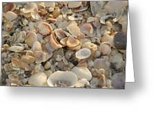 Shells On Beach Greeting Card