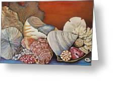 Shells On Shelf Greeting Card