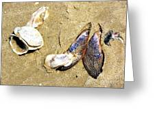 Shells On The Beach Of Jekyll Greeting Card