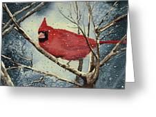 Shelly's Cardinal Greeting Card