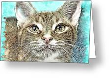 Shelter Cat Fantasy Art Greeting Card