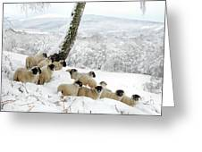 Sheltering Flock Greeting Card