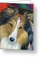 Sheltie - Collie Greeting Card