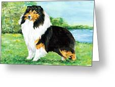 Sheltie Wait Greeting Card