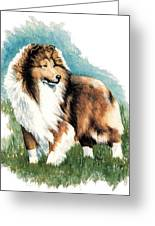 Sheltie Watch Greeting Card by Kathleen Sepulveda