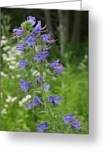 Shenandoah Wildflowers Greeting Card