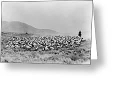 Shepherd And Flock, C1942 Greeting Card