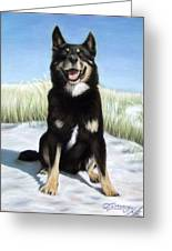 Shepherd Mix Timmy Greeting Card