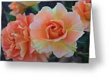 Sherbert Rose Greeting Card