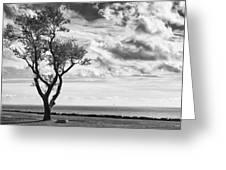 Sherwood Island Greeting Card