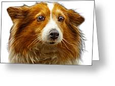 Shetland Sheepdog Dog Art 9973 - Wb Greeting Card