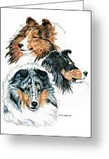 Shetland Sheepdogs Greeting Card