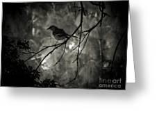Shhhh A Bird Greeting Card