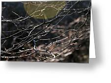 Shimmering Branches Greeting Card