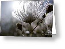Shimmering Flower I Greeting Card by Ray Laskowitz - Printscapes