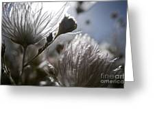 Shimmering Flower II Greeting Card by Ray Laskowitz - Printscapes